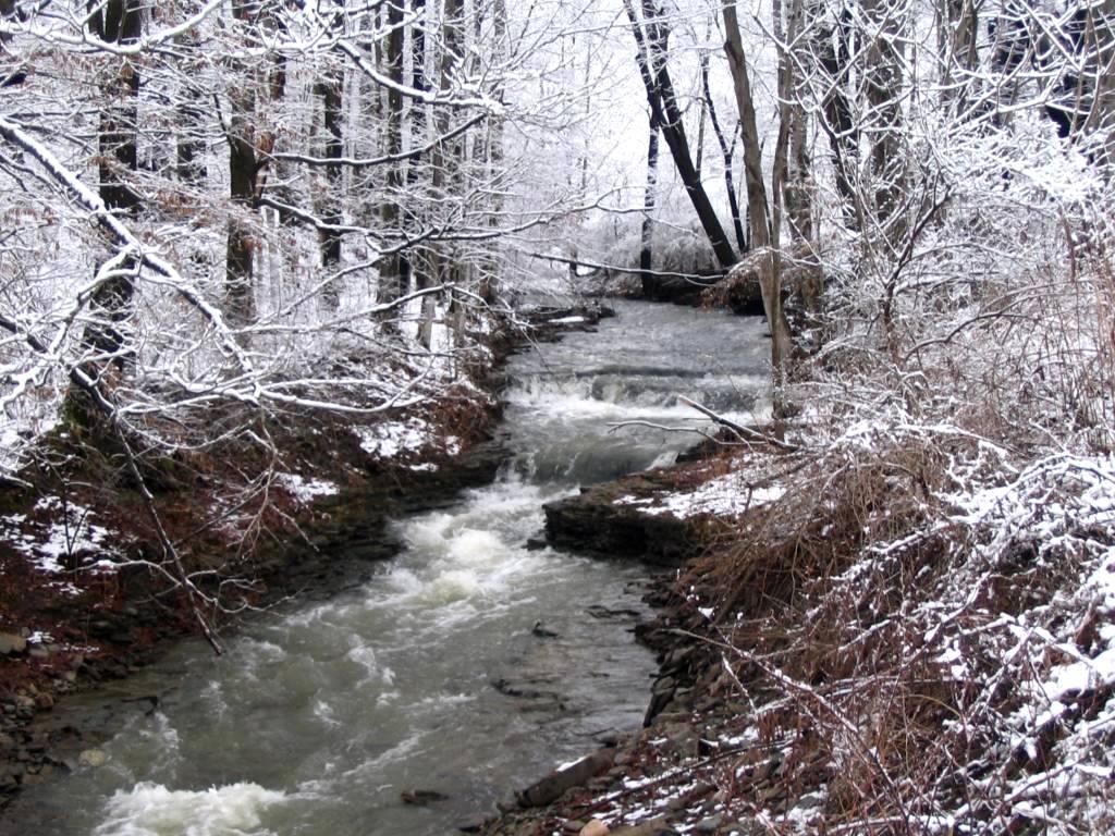Halsey Valley Owl Creek